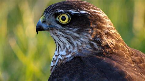 La caza furtiva de aves aún es un grave problema en España ...