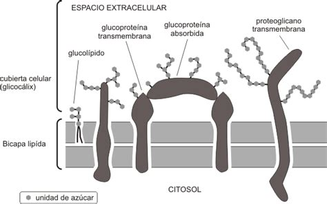 La célula. 2º bachiller. Cosas de Ciencias. Isabel Etayo ...