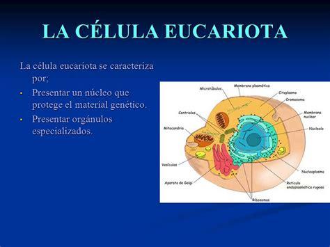 LA CÉLULA EUCARIOTA La célula eucariota se caracteriza por ...