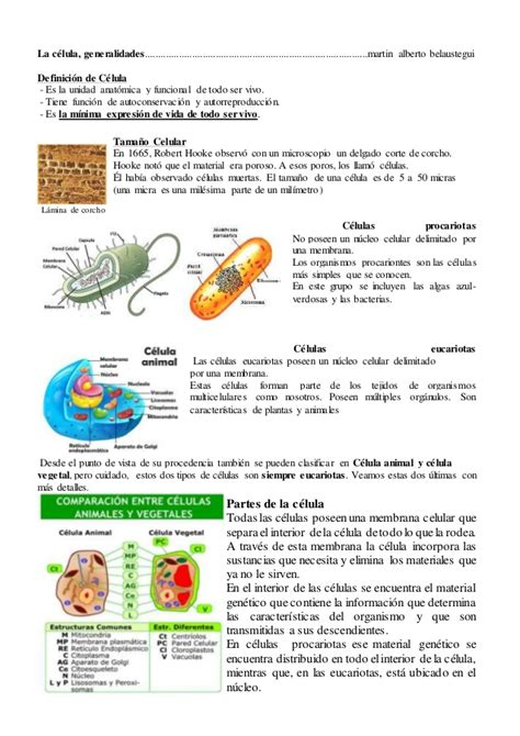 La célula, generalidades, diferencias entre célula vegetal ...