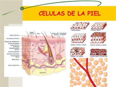 La celula ingrisita docs
