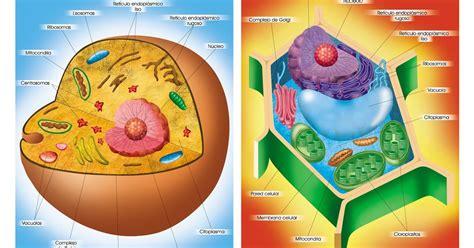 La célula: La Célula organelos y funciones