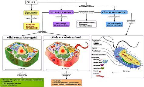 La célula y las estructuras celulares: Eucariotas y ...