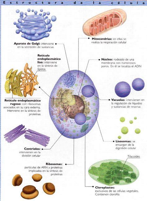 La célula y sus orgánulos | Ciencias Naturales - 2º ESO
