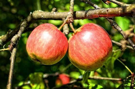 La dieta de la manzana | Beneficios, 3 y 5 días, en qué ...