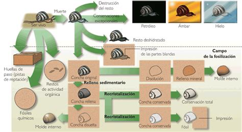 La escuelita de los lunes by TaTo: Formas de fosilizacion