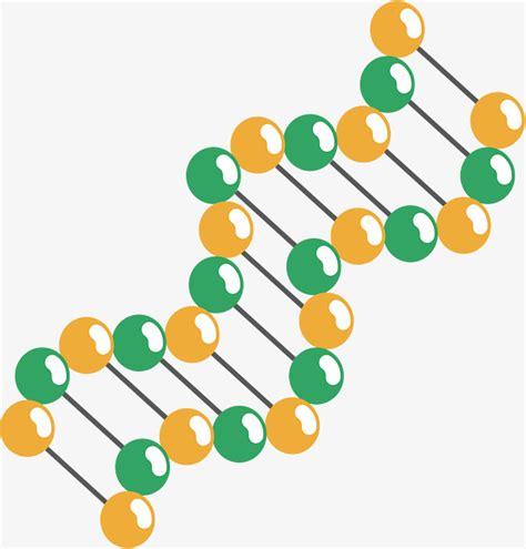 La Estructura De Doble Hélice Molecular, Vector PNG ...