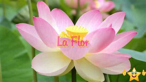 La flor, Reflexiones sobre la familia, Historias para ...