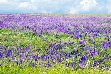 La flora della  terra verde    Groenlandia