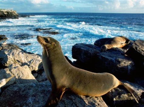 La foca | Informacion sobre animales