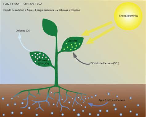 la fotosintesis: la fotosintesis