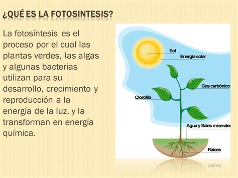 La FotosÍntesis - Lessons - Tes Teach