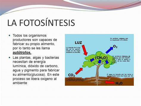 LA FOTOSÍNTESIS. - ppt video online descargar