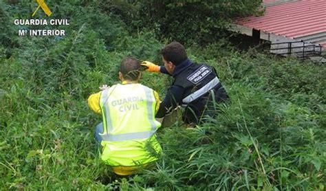La Guardia Civil interviene 330 plantas de «burundanga» en ...
