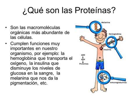 La Hemoglobina Es Una Proteína Que Tiene La Función ...