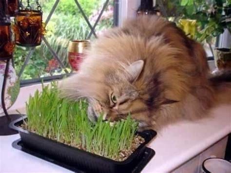 La hierba gatera - Mi Perro Es Único