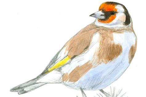 La lluvia pasa factura a las aves | Sociedad | EL PAÍS