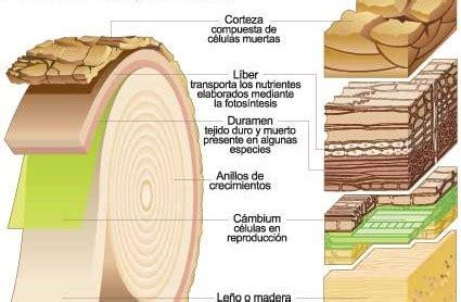 La madera Icarito