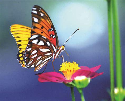 la mariposa.   Mundo Poesía   Foros de poemas