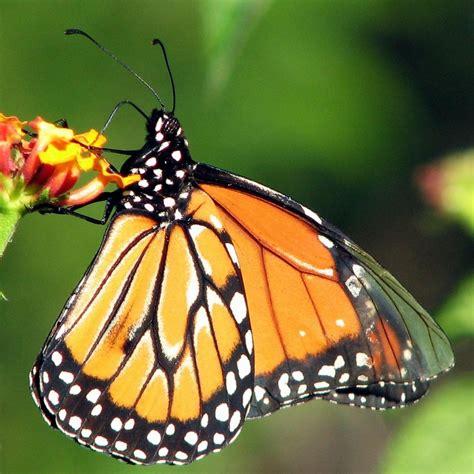 La Mariposa y su magia : Mi Rincón Mágico