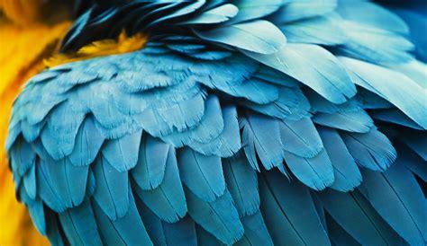 La muda de las aves - Hogarmania