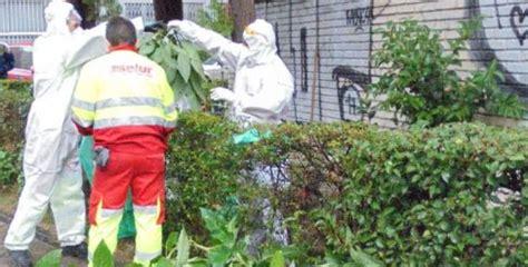La Policía Municipal retira 66 plantas de burundanga de un ...