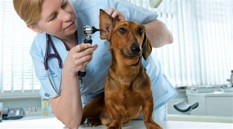 La primera visita al veterinario del cachorro