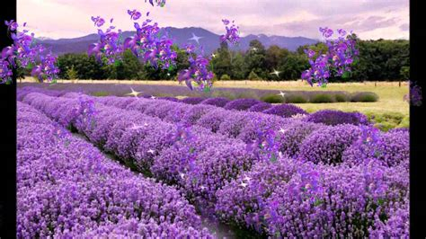 La Provence - YouTube