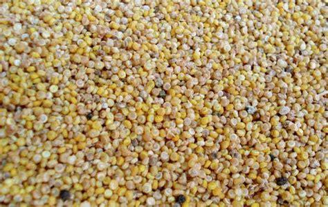 La quinoa, un alimento desconocido con muchas propiedades ...