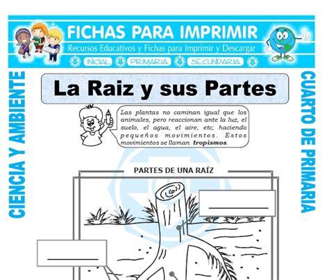 La Raiz y sus Partes para Cuarto de Primaria   Fichas para ...
