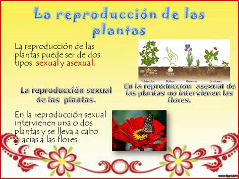 LA REPRODUCCIÓN DE LAS PLANTAS | MY ENGLISH AND SCIENCE