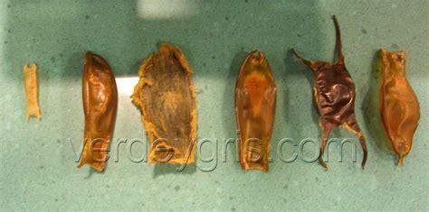 La reproducción de los tiburones   Verdeygris.com