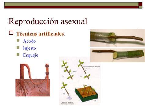 La Reproduccion En Plantas