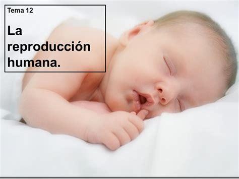 La reproducción humana.   ppt descargar