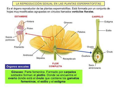La reproducción sexual en animales y plantas 2013