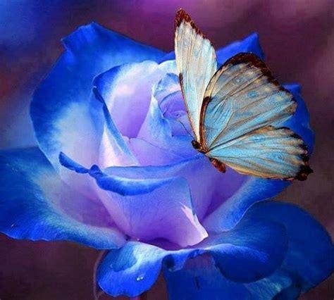 La rosa y la mariposa azul - Falsaria.com