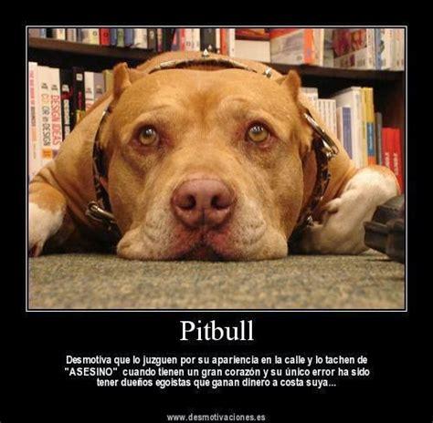 ~ La verdad Sobre Los Pitbulls ~ Blog De El Pitbulls Y Bully
