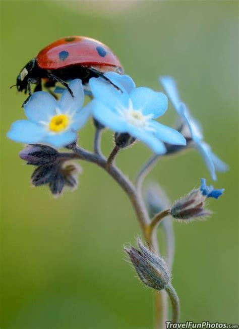 Ladybug - a symbol of luck | Just beauty | Pinterest ...