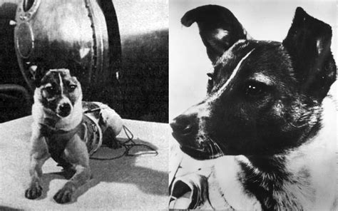 laika 1st dog in space history's famous dog ark animal ...