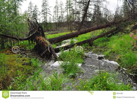 Landscape With A Stream. Royalty Free Stock Photography ...