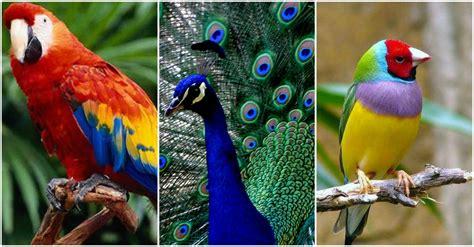 Las 10 aves más bellas del mundo ¡Realmente hermosas ...