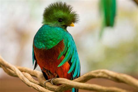 Las 10 Aves Mas Exoticas del Mundo   EsLife