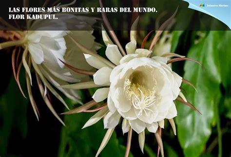 Las 10 flores mas bonitas y raras del mundo.   Piedra ...