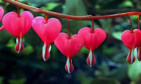 Las 10 flores más hermosas del mundo   YouTube