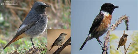 Las 12 aves facilonas para ver en los alrededores de tu ...