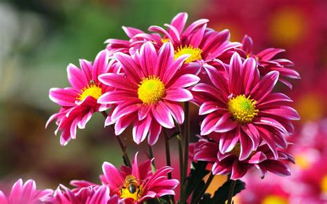 Las 15 Flores Más BONITAS  Con Fotos  ® Florespedia
