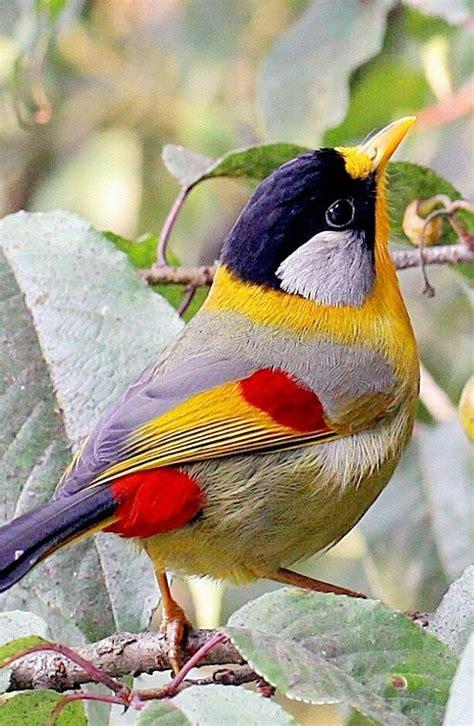Las 25+ mejores ideas sobre Pájaros en Pinterest   Pájaros ...