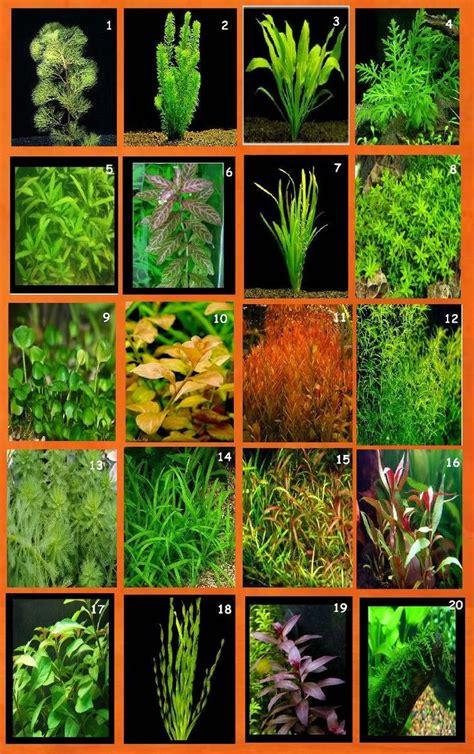 Las 25 mejores ideas sobre Plantas Acuaticas en Pinterest ...