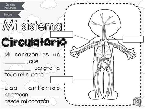 Las 25+ mejores ideas sobre Sistema circulatorio en ...