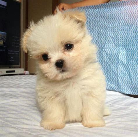 Las 30 fotos de cachorros de perro más votadas en Facebook ...